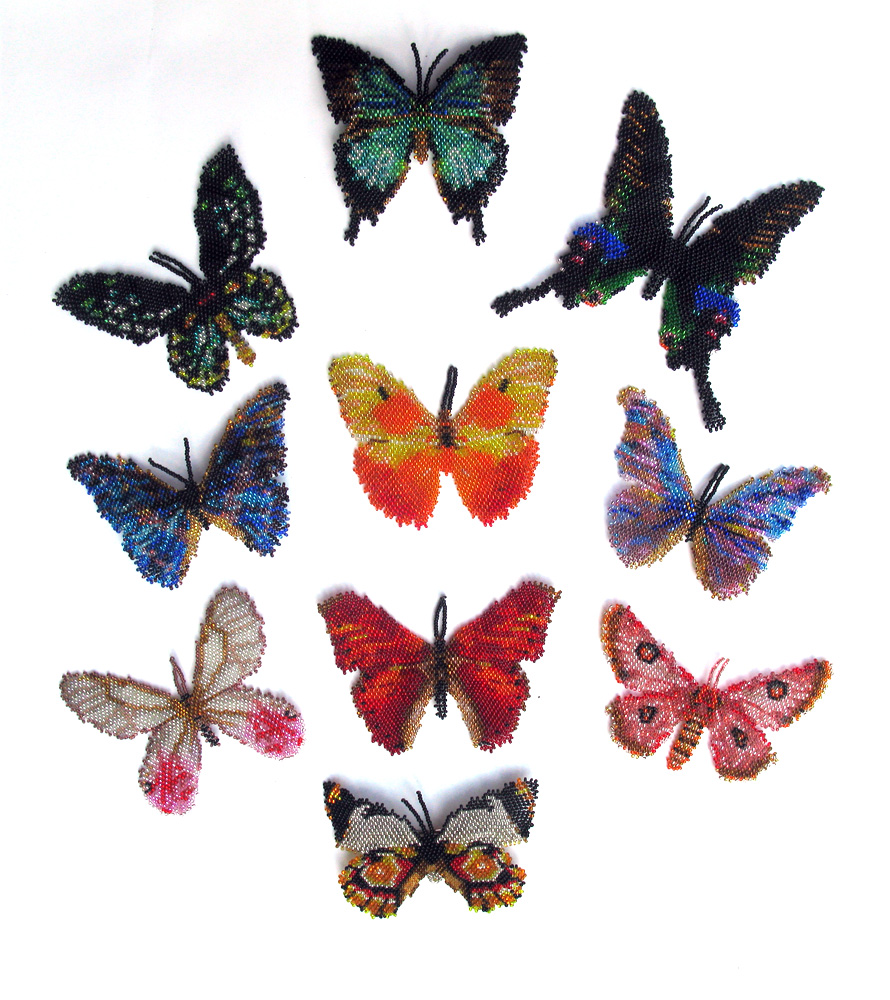 Butterfly Rainbow of Southern Hemisphere