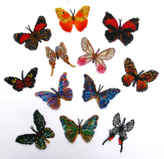 12 South American Butterflies
