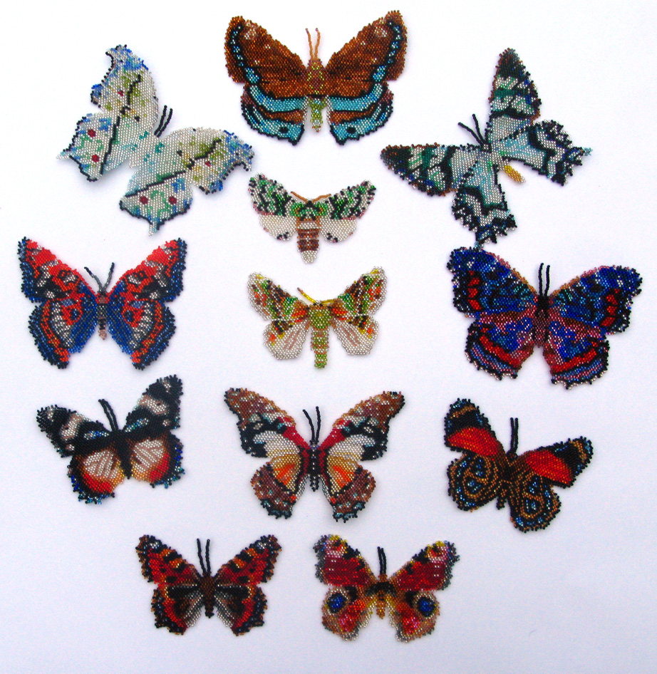 12 Multicoloured Lepidopteras