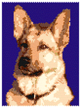 Reddy the German Shepherd