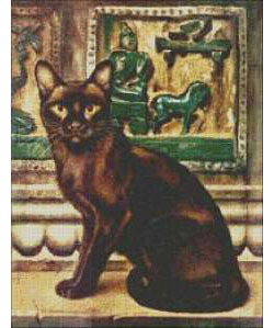 Black Cat of Bombay