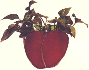 APPLE PLANTER