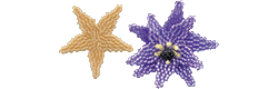 Star Fish 1 or Flower