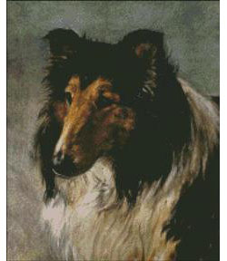 Portrait of a Champion Collie